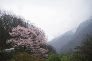 20120420_photo01